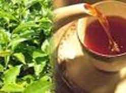 پاورپوینت ارتباط مصرف چای و سرطان