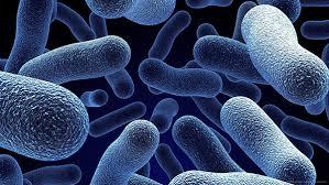 دانلود تحقیق باکتری