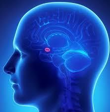 پاورپوینت بررسی نقش هوش هیجانی در پرستاری